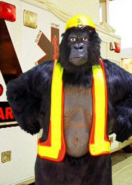abram the safety ape