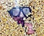 popcorn conti