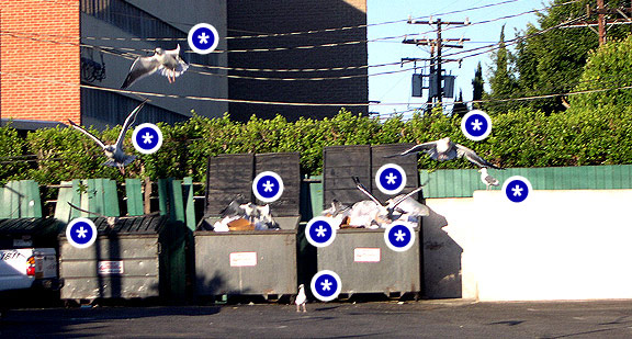 Seagulls that are assholes are marked with an asterick.