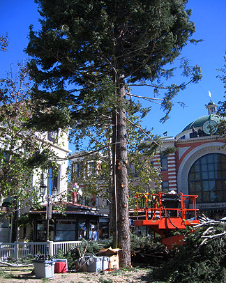 How To Create A 110′ Tall Tree Out Of Multiple Trees And Make It Look Perfectly Fake: The Grove Christmas Tree Primer