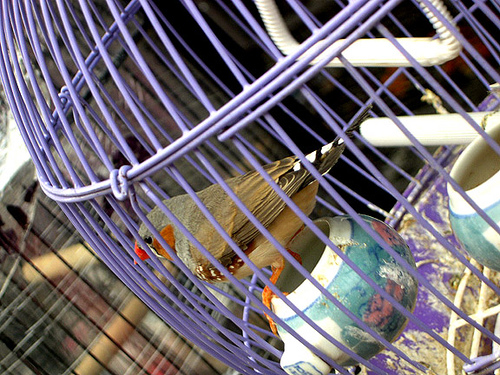 Profile: Bird in Jail, Chinatown