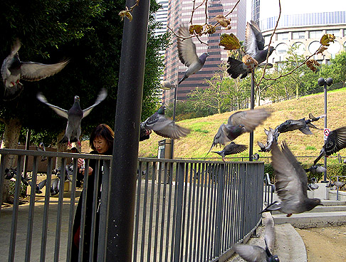 Photo Op: Downtown Pigeons Get Crazy On