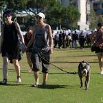 festival going dog